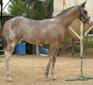 09 Filly by CNC Two Times a Kid